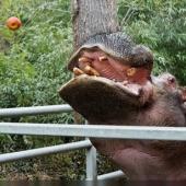 Zoo d\'Amnéville